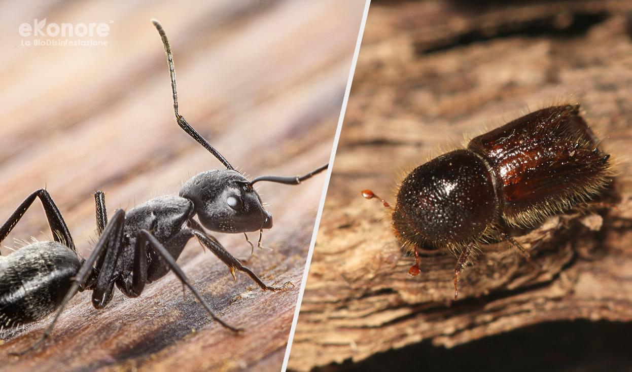Tarli, formiche o termiti facciamo chiarezza